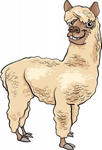 Anselm Alpaca